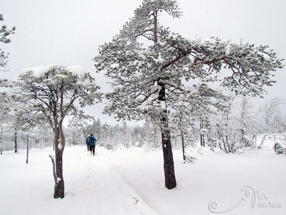 Durch das tief verschneite Fulufjäll zum Njupeskär - Schwedens höchstem Wasserfall