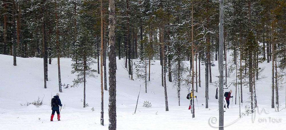 Auf Back Country Ski vom Idrefjäll durch Wald und Moor...