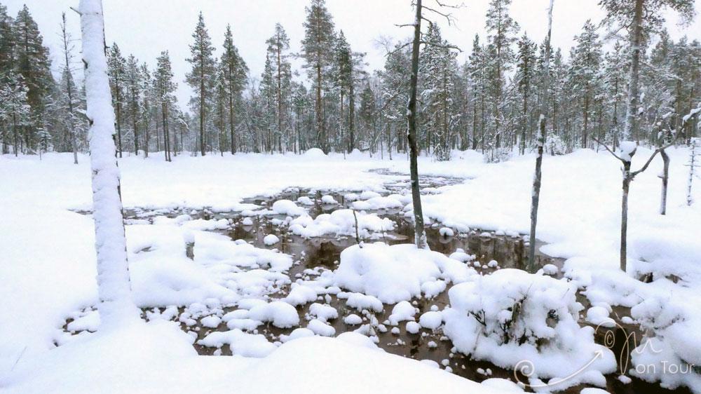 Auf Back Country Ski durch verschneiten Wald und Moorlandschaft