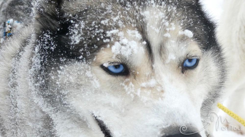 Diese blauen Augen - einfach unglaublich