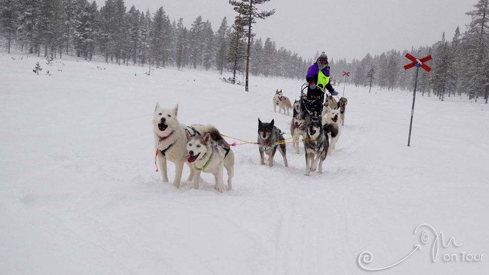 Schlittenhundetour durch Schwedens Winterwald